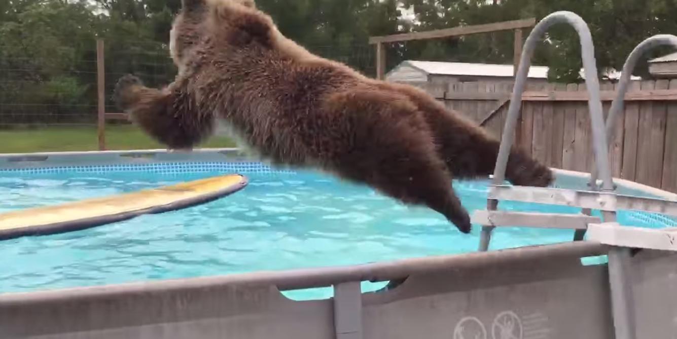ВИДЕО: Гризли кој обожува да скока во вода