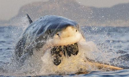 """Фотограф го """"фати"""" најопасниот момент во океанот!"""