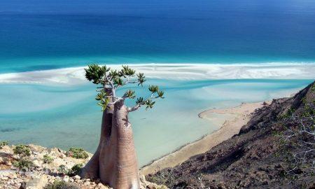 ГЛЕТКА КАКО ОД ФИЛМ: Погледнете ја убавината на островот Сокотра (ВИДЕО)