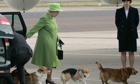 ТЕШКА ОДЛУКА ЗА КРАЛИЦАТА: Омиленото куче на Елизабета Втора успиено поради старост и болест