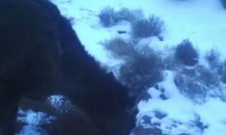 Во Кина снимено мистериозно животно (ВИДЕО)