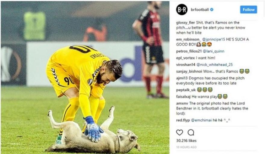 """ХИТ НА ИНТЕРНЕТ: Кучето кое се прошета на """"Филип Втори"""" ги освои социјалните мрежи"""