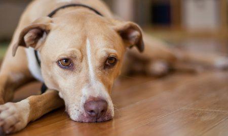 """Кучињата можат да """"намирисаат"""" лоши луѓе"""